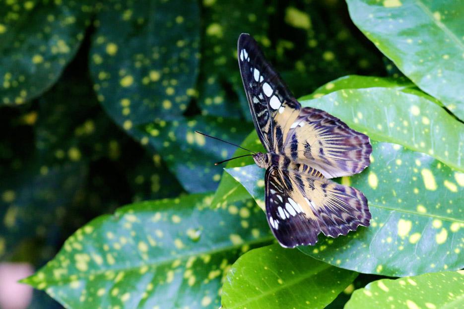 091014_01_butterfly03