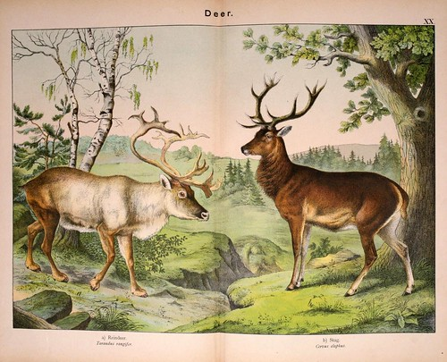 004-Natural history of the animal kingdom for the use of young people..- 1889-William Forsell Kirby