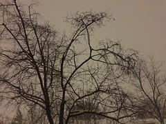 Snowy Saturday night in UCity