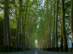 Bordered road - Photo of Vouneuil-sur-Vienne