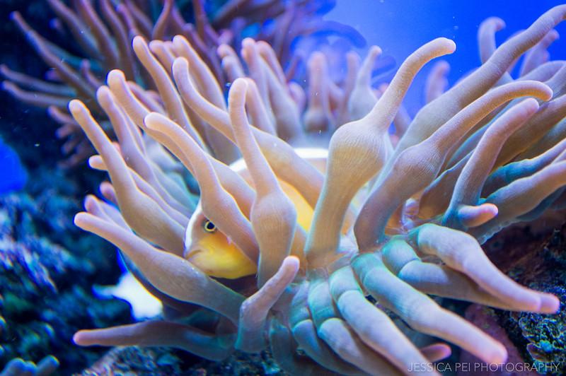 Fish in Sea Anemone Sea World San Antonio