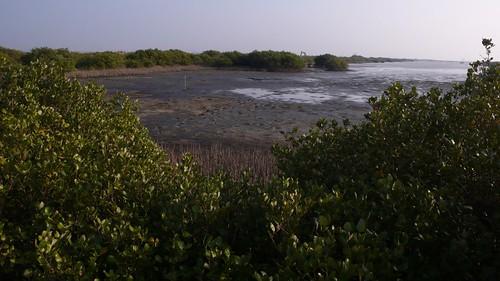 鰲鼓濕地為國家重要濕地,具有豐富的生物多樣性,未來擬復育增加其棲地多樣性。郭瓊瑩攝