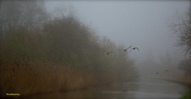The duck's came out of the fog