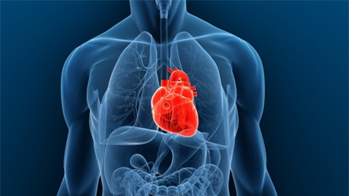 Ghép tim của người bị chết não - Đột phá y học năm 2014