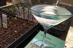 app martini MG_0512