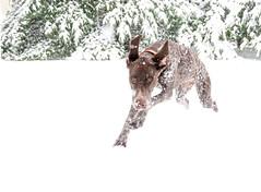 5429 Piper in the snow