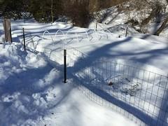 snowshovelling garden IMG_0414