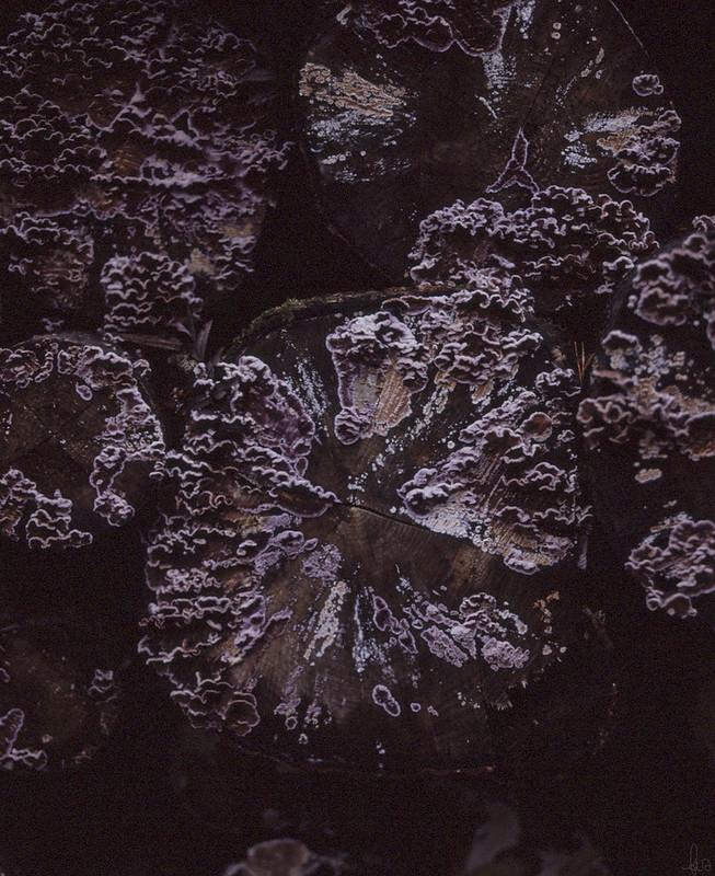 fungi growing on logs