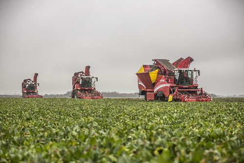 Grimme Beet Technology Day at Swineshead, Boston. | by GRIMME Group