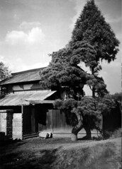 Vanished Japan:  Two Pines (1956)