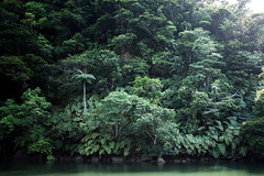 西表島 - 沖縄 / IRIOMOTEJIMA - OKINAWA #002