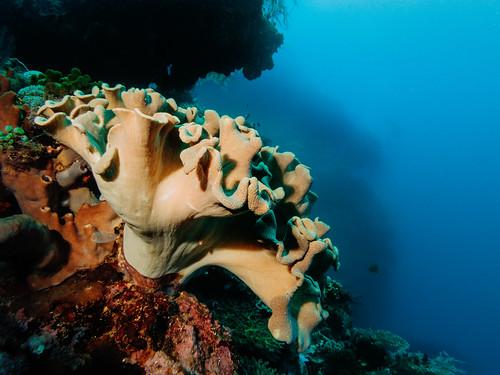 canon travels underwater scuba scubadiving 2014 s100 atauroisland timorleste canons100 underwaterhousing jasonbruth fixs100 fixs100housing timorlorasae divesitetabletop
