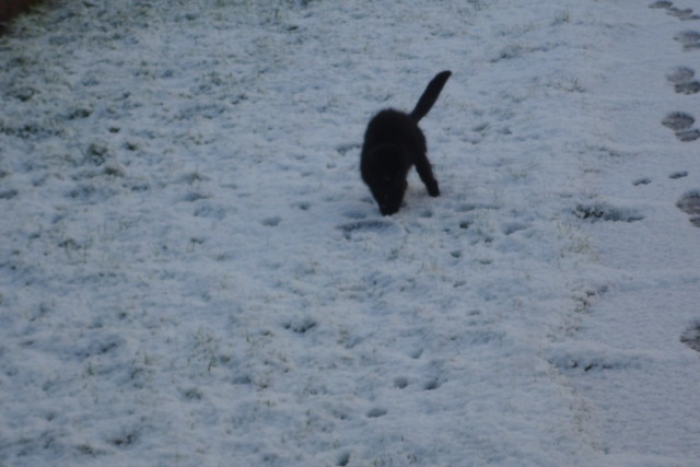 Ebony playing in the snow