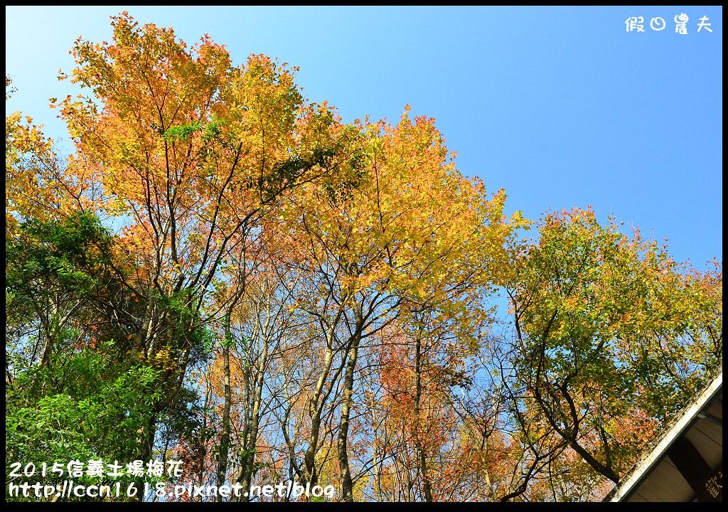 2015信義土場梅花DSC_9463