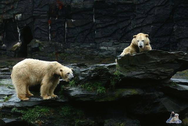 Tierpark Berlin 10.01.2014 6