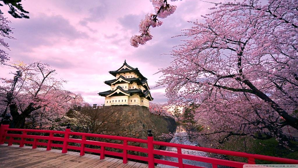 cherry_blossoms_japan_2-wallpaper-1920x1080