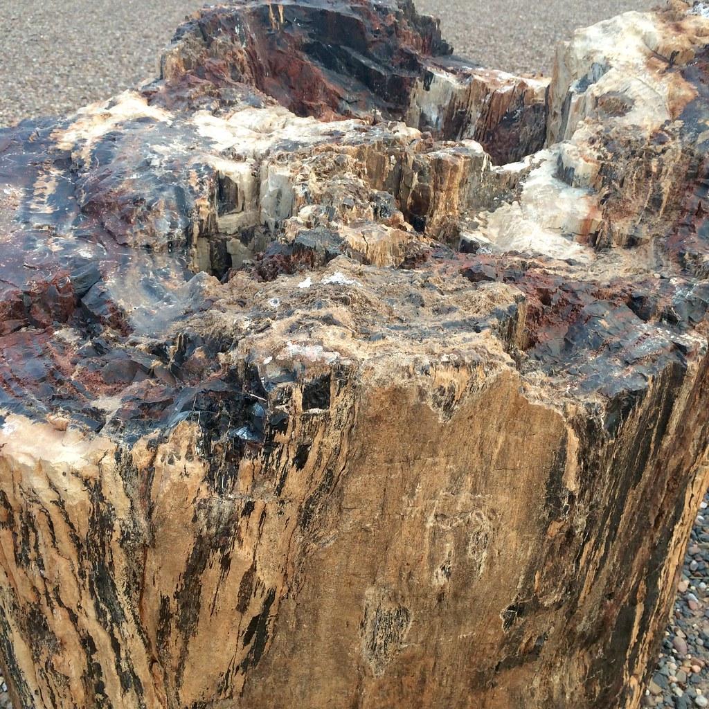 Wood Elevation Usa : Joseph city map northern arizona mapcarta
