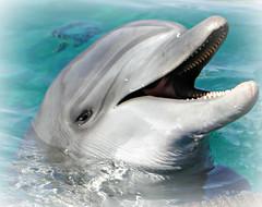 Dolphin- Eilat
