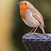 Pretty looking bird by Click U