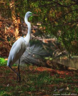 Bird from Wakodahatchee Wetlands