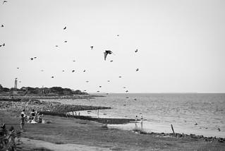 Playa y pájaros