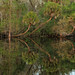 Hillsborough River, Trout Creek Park, Hillsborough County, Florida 2 by Alan Cressler