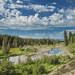 Moose Habitat by Xiang&Jie