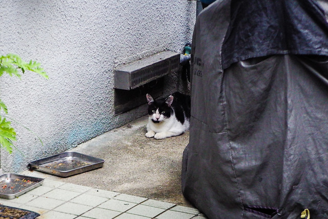 Today's Cat@2016-07-28