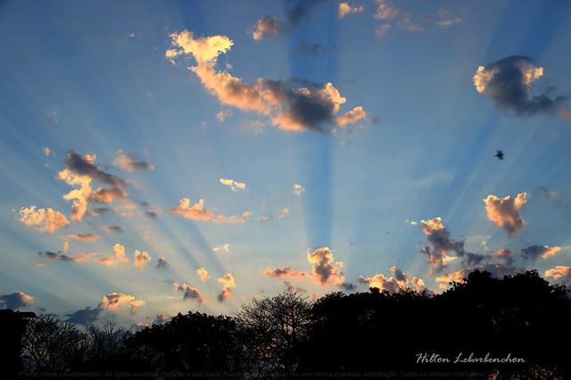 Céu de algodão /  cotton sky
