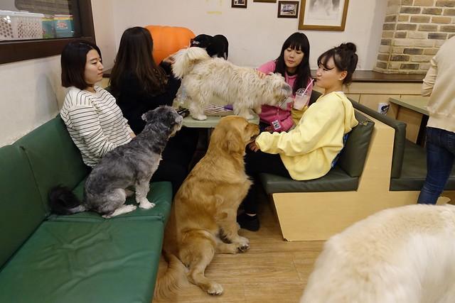 Bau House Dog Cafe - Seoul