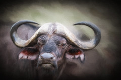 buffalo full face arty