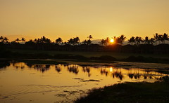 the fish turn to the rising sun on golden pond