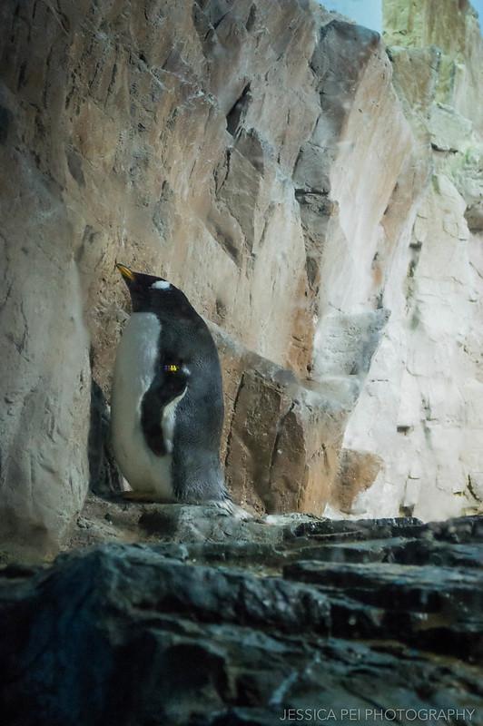 Penguin Encounter Sea World San Antonio Texas