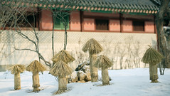 Changdeokgung_Palace_Snow_16