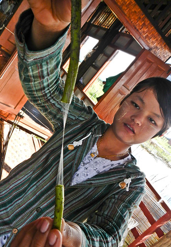 The Weaving Village on Inle Lake, Myanmar: Demonstrating the First Step in Processing Lotus Threads