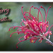 Merry Xmas 2014 by tassie303