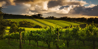 Red Hill Vines