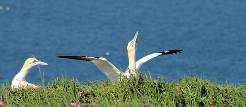 Gannet Site Protecting
