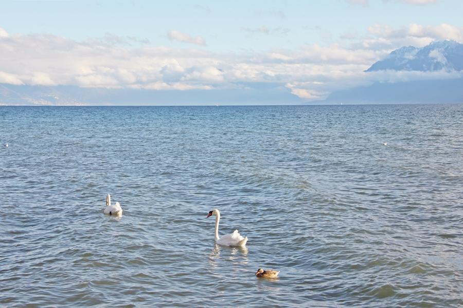 Lac Léman (5)