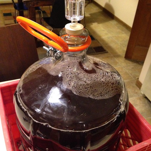 Acorn Steam, ready for bottling #homebrewing