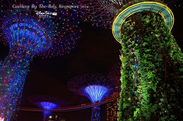 Singapore - Gardens By The Bay 19