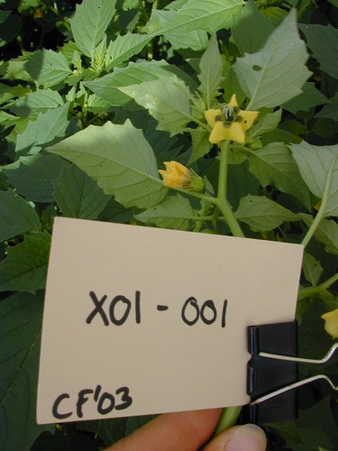 X01-001 CF03 Fl1
