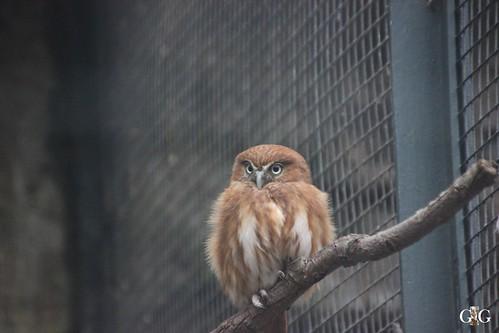 Sonntags Besuch im Zoo Berlin 25.01.2015 62