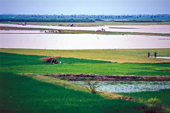 estuary(0.0), sea(0.0), bay(0.0), mudflat(0.0), shore(0.0), coast(0.0), wetland(1.0), agriculture(1.0), horizon(1.0), polder(1.0), field(1.0), grass(1.0), plain(1.0), natural environment(1.0), paddy field(1.0), salt marsh(1.0), rural area(1.0), grassland(1.0),