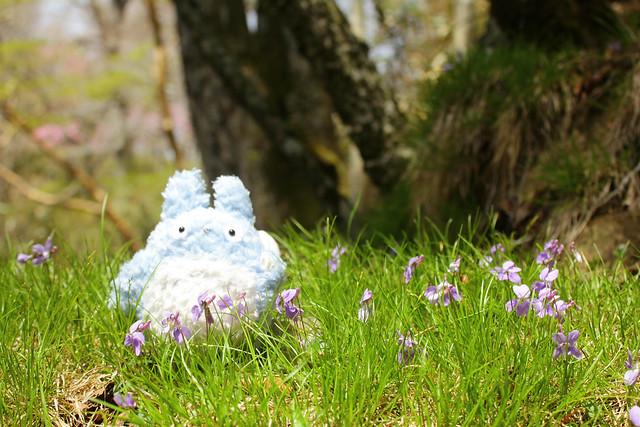 2014-05-06_02539_九州登山旅行.jpg