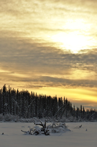 winter sky snow alaska forest frozen spruce boreal taiga tananariver
