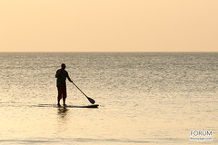 sea, ocean, wave, water sport, stand up paddle surfing, surfboard, paddle,
