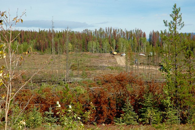 Salvage logging of a Mountain Pine Beetle attacked stand