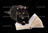 Black cat reading a book on black background