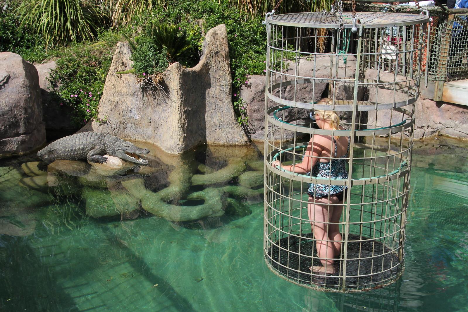 Alltagsfluchten Krokodiltauchen Südafrika